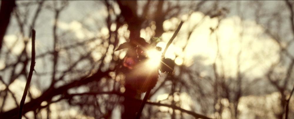 08_Sunflare_Leaves_1.jpg