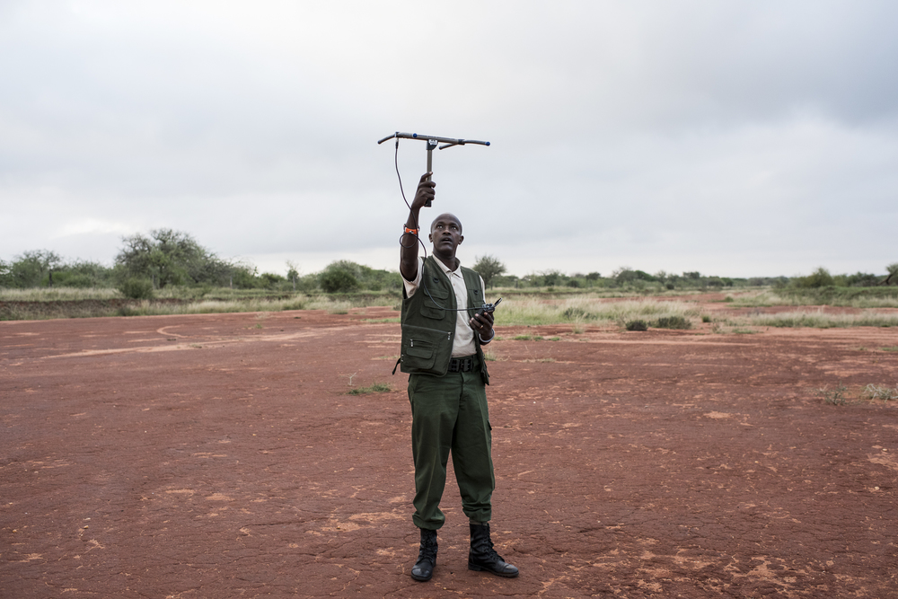 David Daballen, a field operations employee of the Kenya based NGO, Save The Elephants, tests the signal of an elephant collar prior to an elephant collaring operation in the Tsavo National Parks in Kenya on March 15, 2016. The collars are fitted with satellite radio technology which can track the elephant's location, providing critical data to understand the elephant's interaction with infrastructure development in the parks.