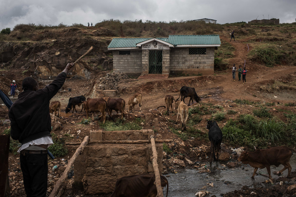 Edwin Lekishon, 16, watches his cattle cross a creek in Kibera, Africa's biggest urban slum, on their way to a field on the slum's outskirts in Nairobi, Kenya on November 2, 2016. Masai herders move their cattle from southwestern Kenya to graze in Nairobi when the land is too dry to raise livestock.