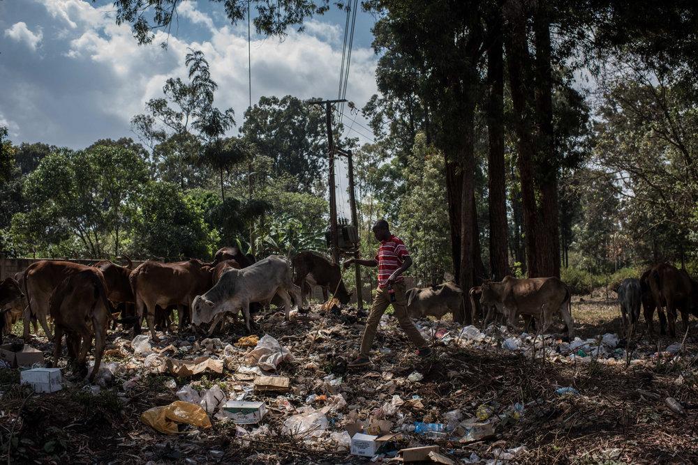 As Grasslands Dwindle, Kenya's Shepherds Seek Urban Pastures