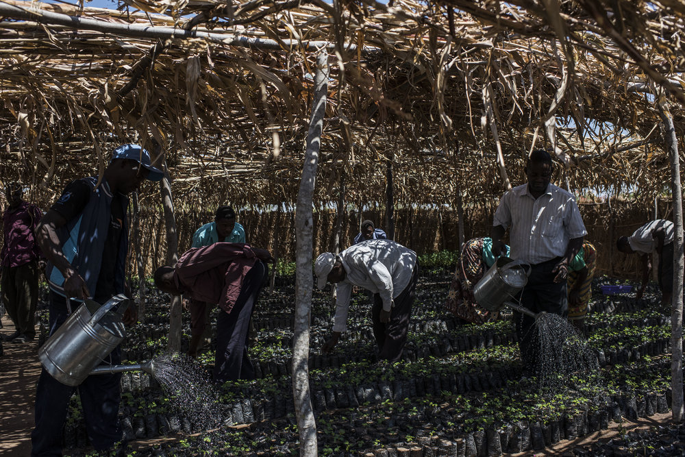 People water seedlings at a work for food program run by NGO's World Vision International and the World Food Program in the village of Ngwelelo, which lies in one of the areas most affected by drought, on September 10, 2016 in Zomba, Malawi.
