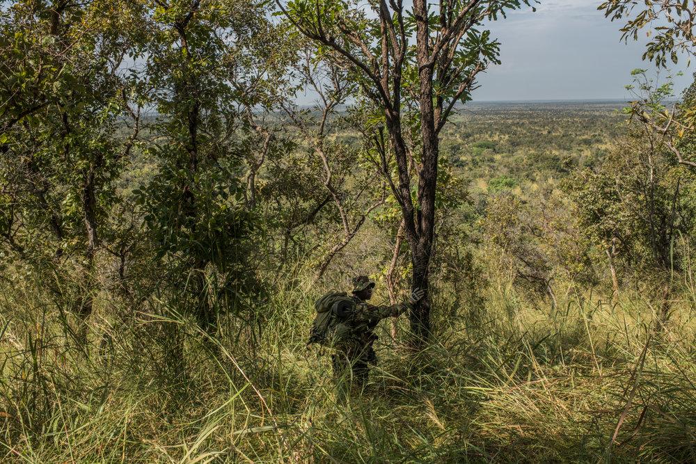 Ranger Amatimi Mbia, walks through tall grass during a recon patrol near the Bagunda outpost in Garamba National Park on November 29, 2017.
