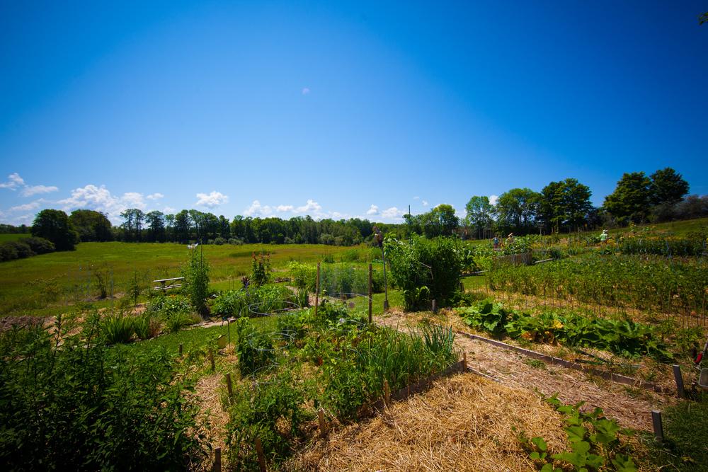 GardenTour2015-29.jpg