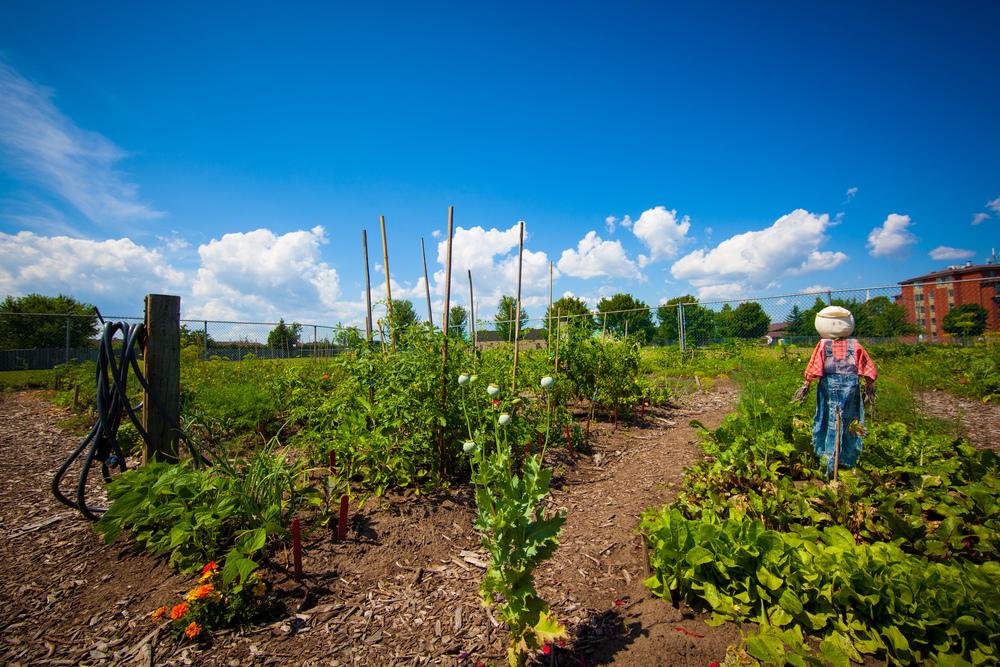 GardenTour2015-61.jpg