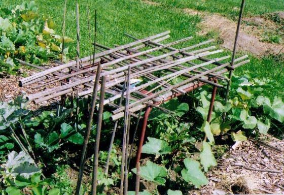 garden phase 2.jpg