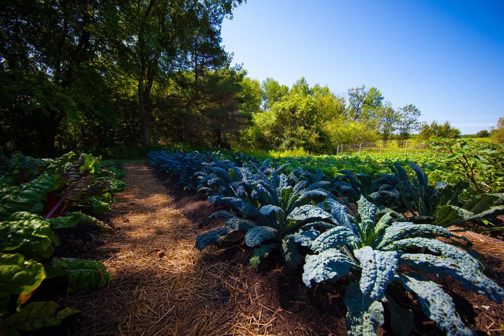 GardenTour2015-22.jpg