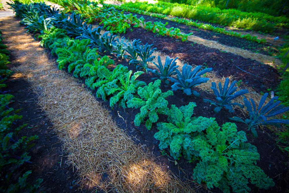 GardenTour2015-23.jpg