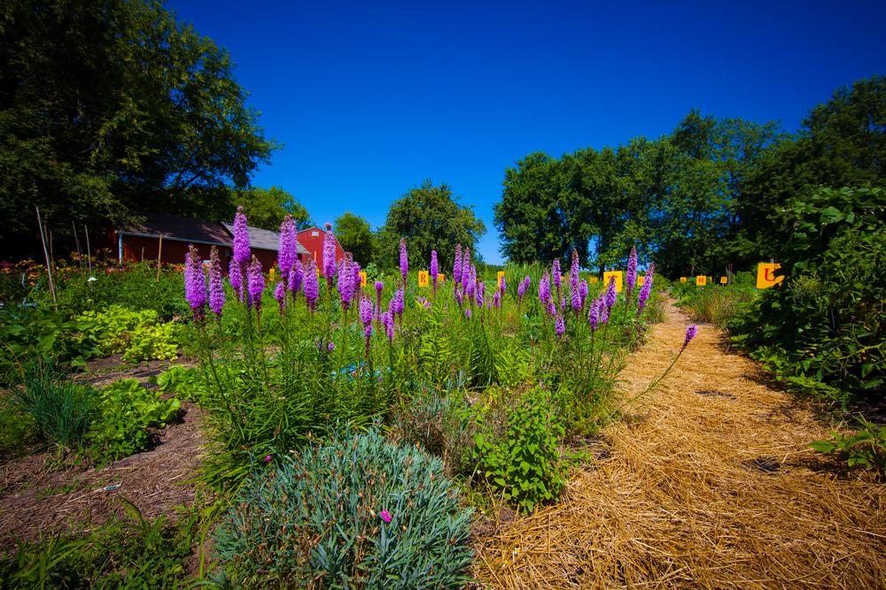 GardenTour2015-26.jpg