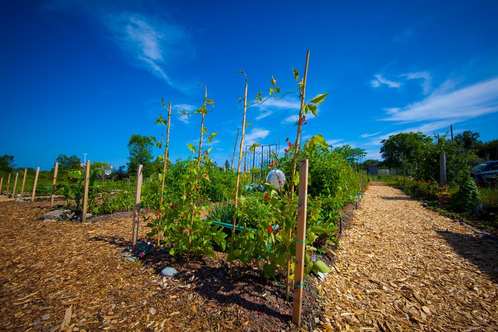 GardenTour2015-82.jpg