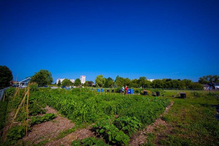 GardenTour2015-8.jpg