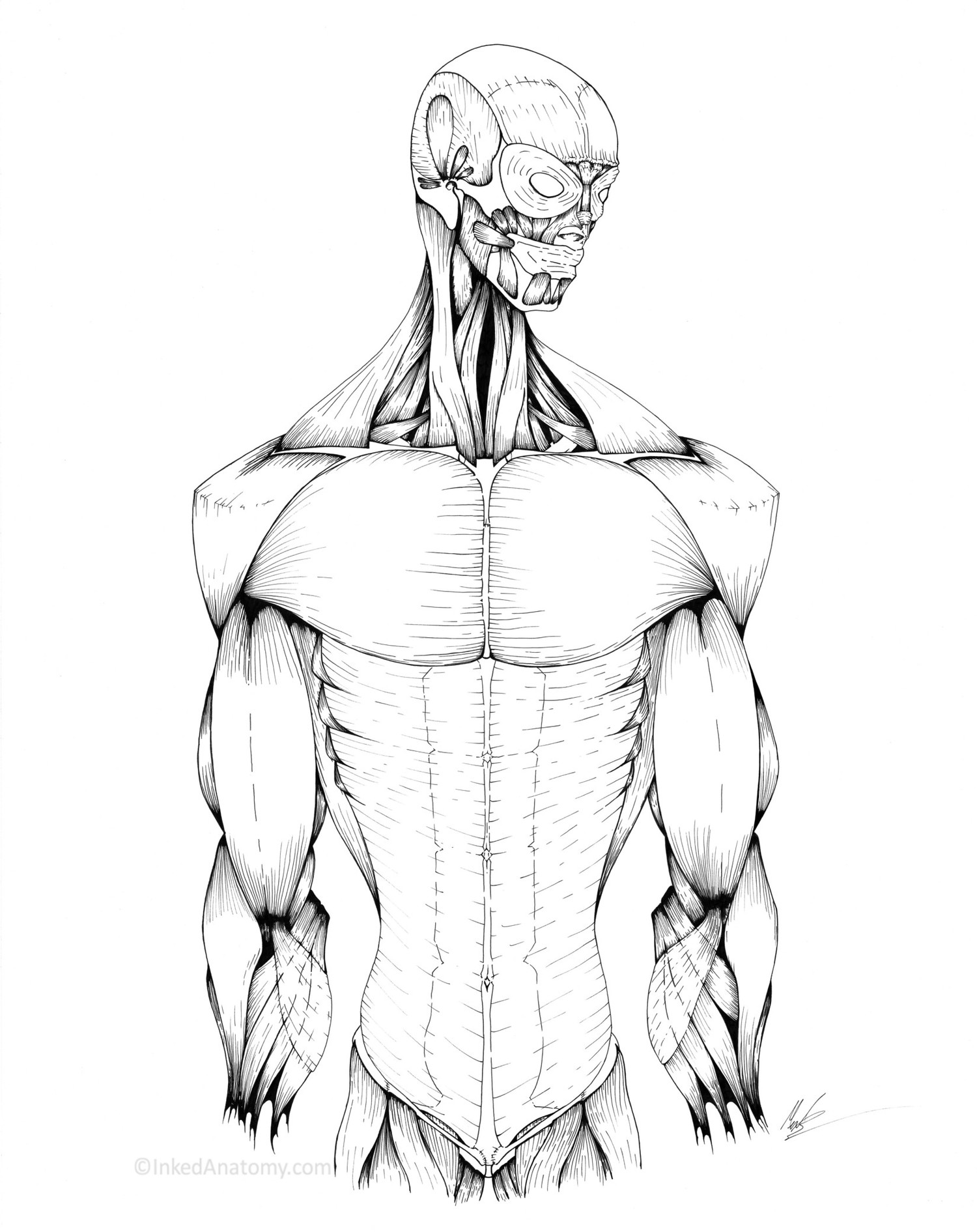 Full Body Collection Inked Anatomy