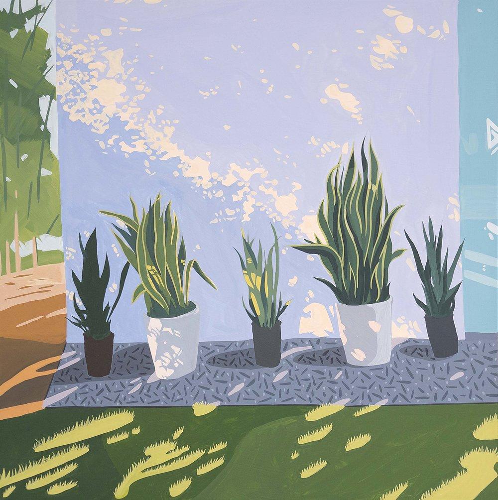 Five Snake Plants
