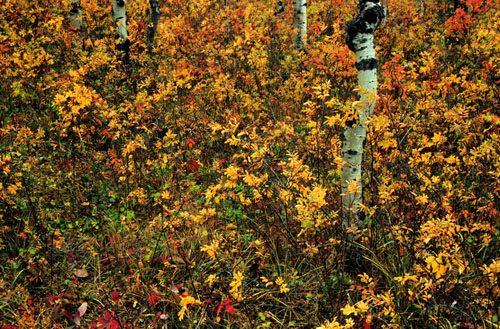 fall1_01.jpg