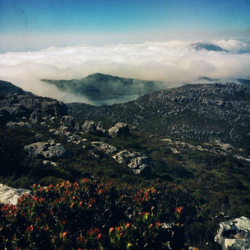 View atop Table Mountain. Photo by Ben Schechter