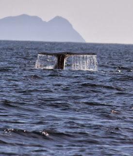 2013 whale watching.jpg