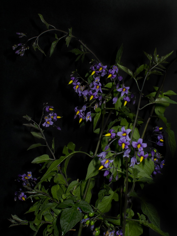 Night Garden Series