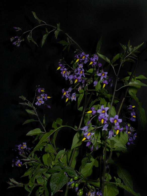Night Garden Series