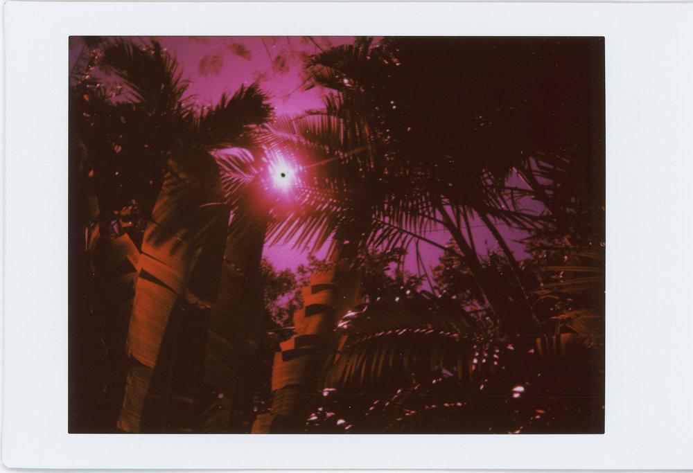 pinktropic.jpg
