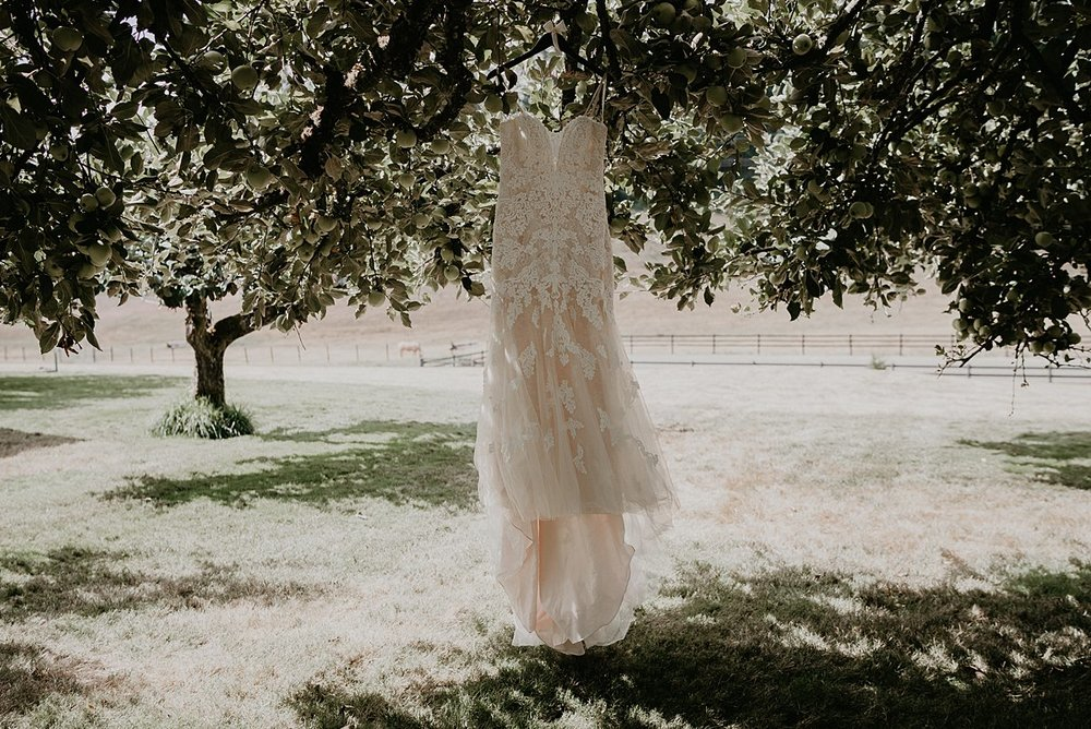 orchard-at-sunshine-hill_0006.jpg