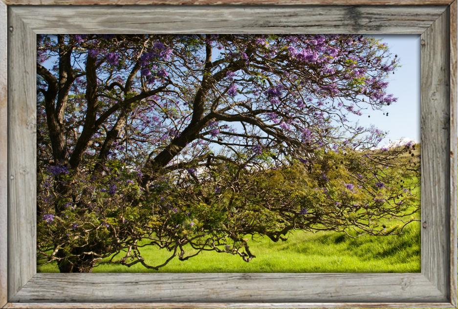 landscapes - Jacaranda Photograph in Rustic Frame