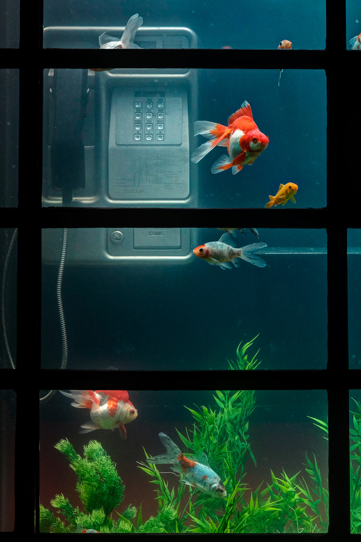 Aquarium, Benedetto Bufalino & Benoit Deseille