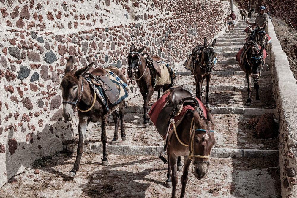 Donkey train from Oia to Ammoudi