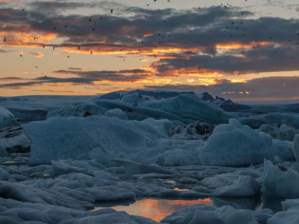 birds, ice, sunset... Jökulsárlón (XF 16-55mm f2.8 at 52mm 1/250 f8 ISO200)