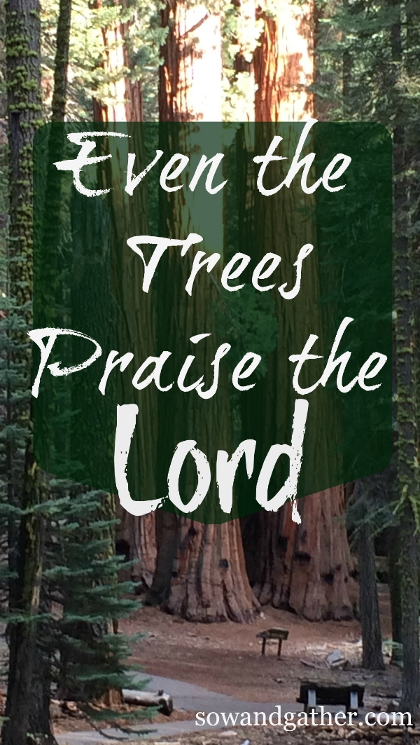 even-the-trees-praise-the-lord-sowandgather