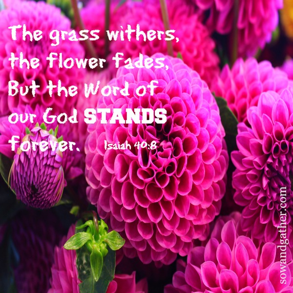 grass-withers-flower-the-flower-fades-the-word-of-our-God-stands-forever-Isaiah 40:8- sowandgather