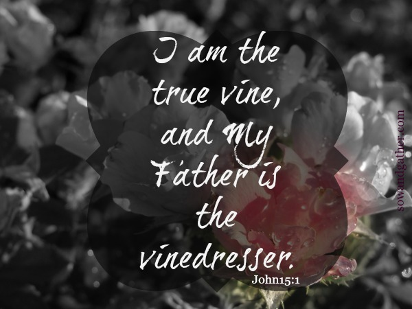 I am the true vine, and my Father is the vinedresser. John 15:1 sowandgather #Easter