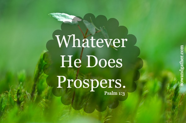 whatever he does prospers Psalm 1:3 #sowandgather