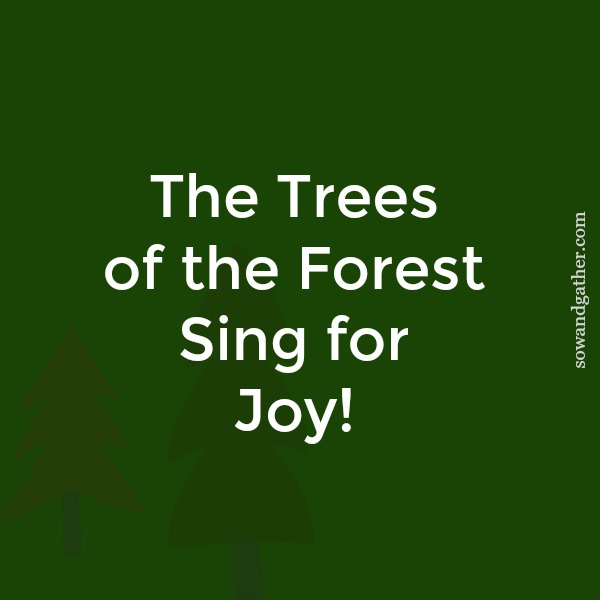 The trees of the forest sing for #joy #sowandgather