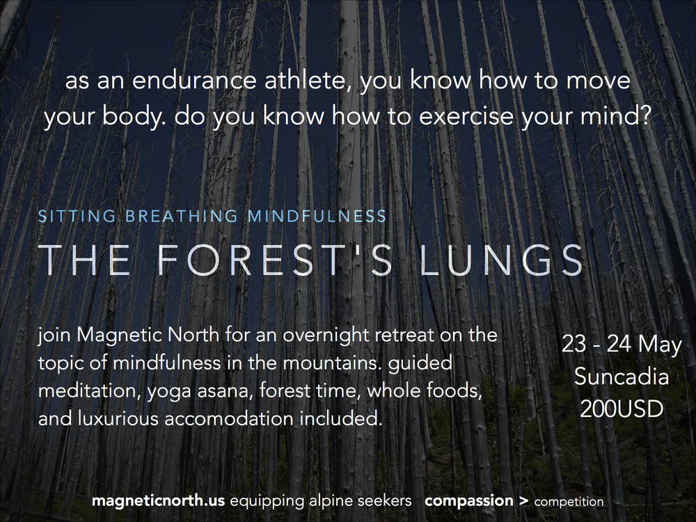 the forest's lungs copy.jpg