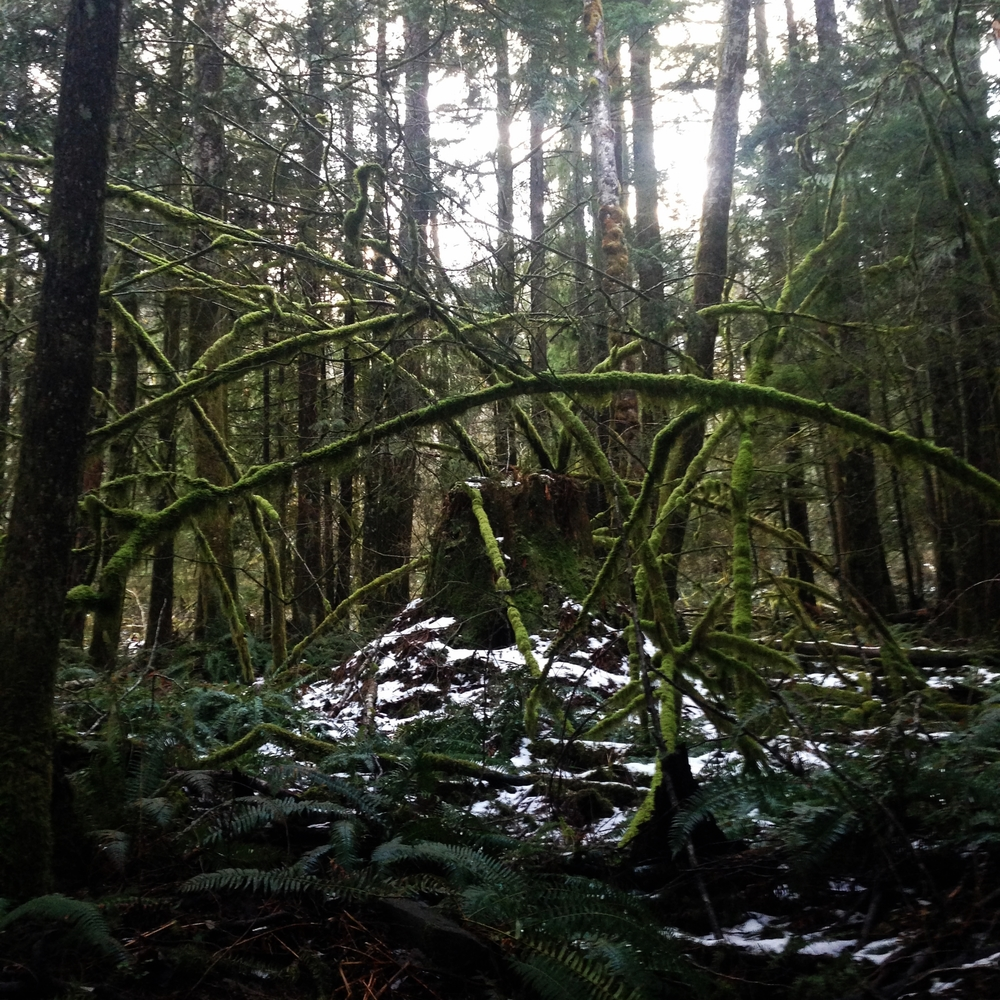 rainforest shrine, North Bend 2014