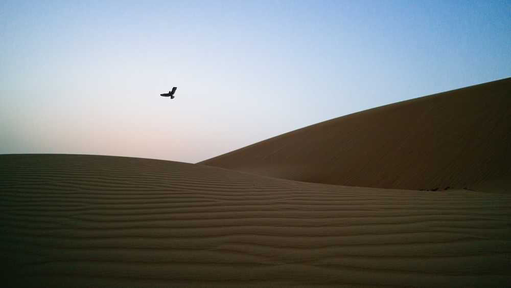 Deep within the dunes in the beauty of desolation, the sport of bird tossing is practiced...By just a few.