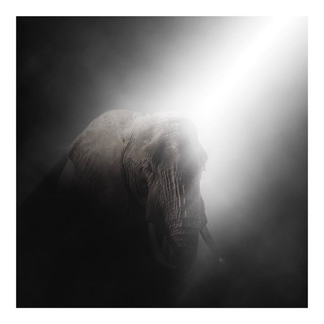 Gentle beasts... Staying alive  #JaysEndangeredSeries