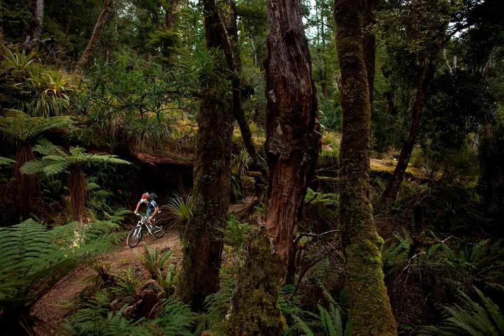 Australian mountain bike journalist Chris Southwood rides beneath a fallen tree during a day ride on the Moerangi Trail near Whirinaki, New Zealand. Photo: Derek Morrison