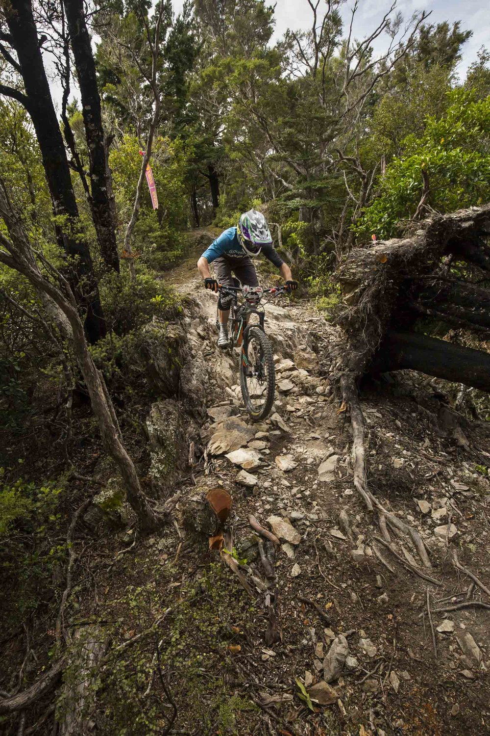 Tristan Rawlence (2nd in Open Men today) sneaks through past an recently upturned tree
