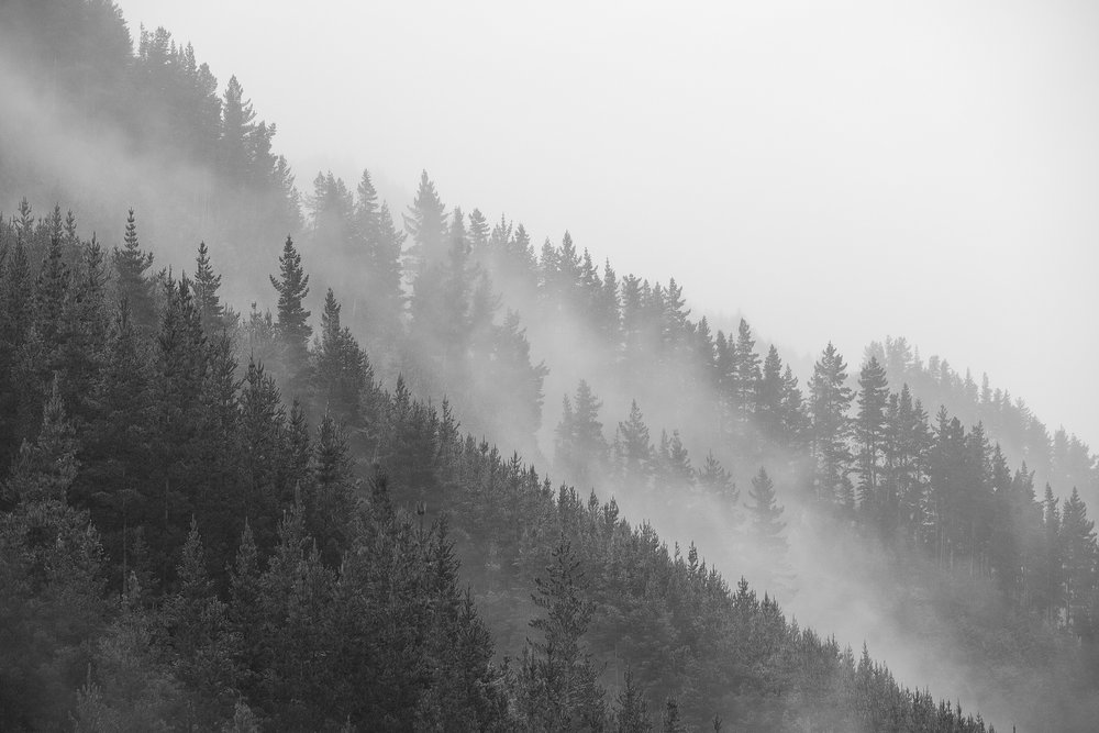 A misty morning had a few racers looking nervous at the bottom of the hill. Photo: Odin Woods.