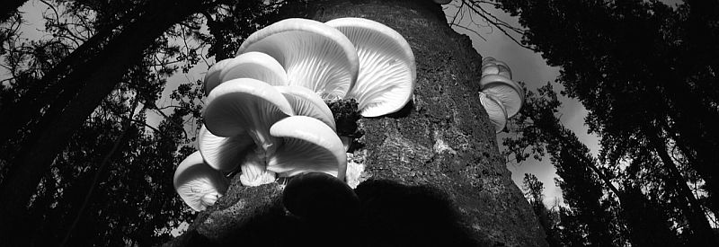 Wide Angle Mushrooms by Kody K.