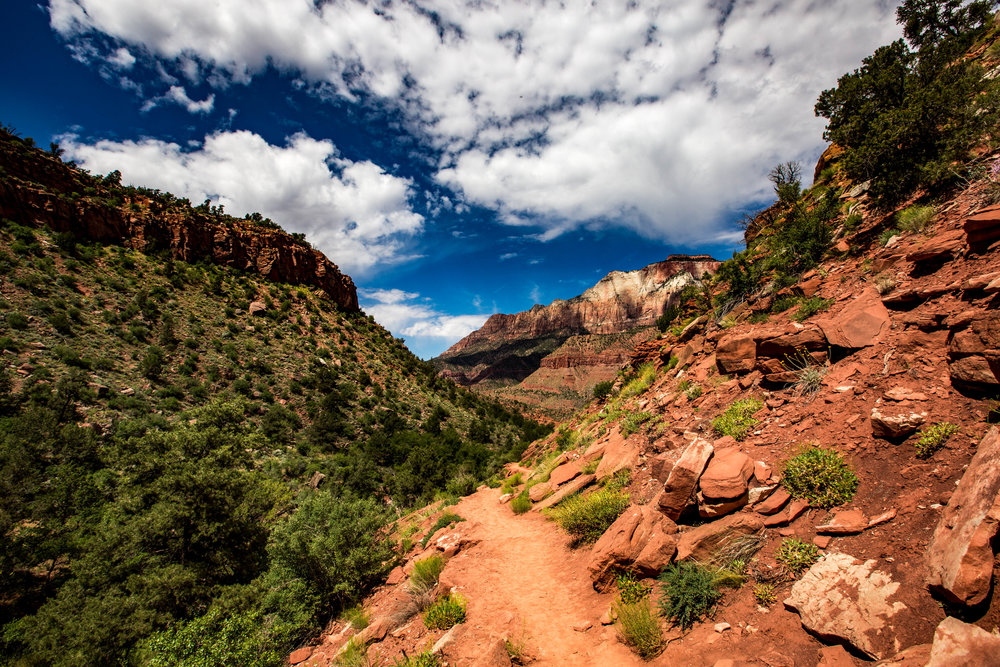 A photo of The Watchman Trail as it quickly began to pick up and this was taken right about when I had the first of many experiences when I started to question everything and how out of shape I am.