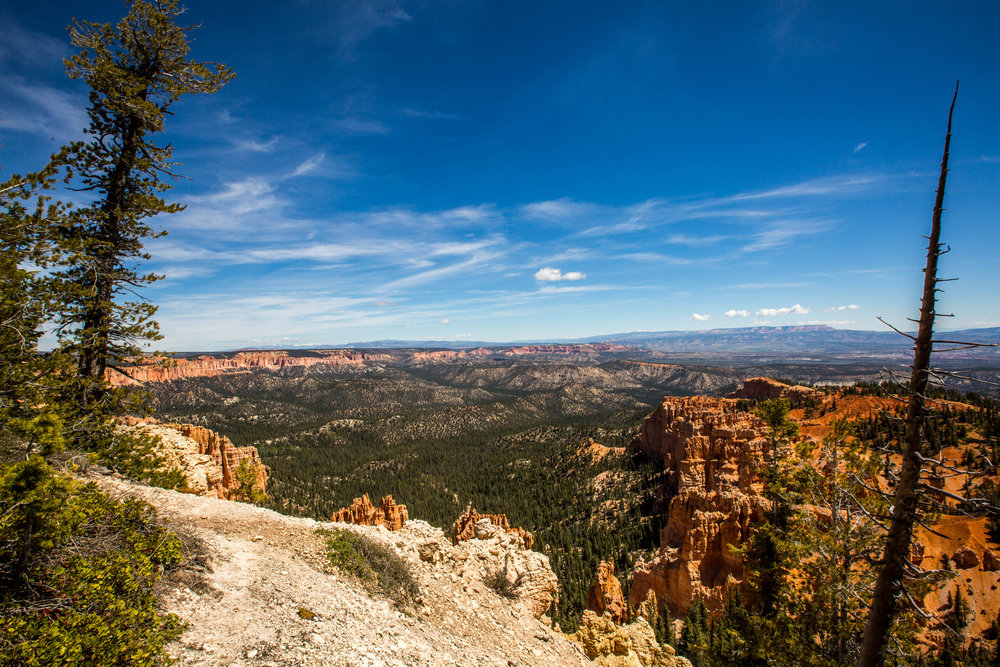 Bryce is so big that I had to take multiple shots from different angles at Rainbow Point