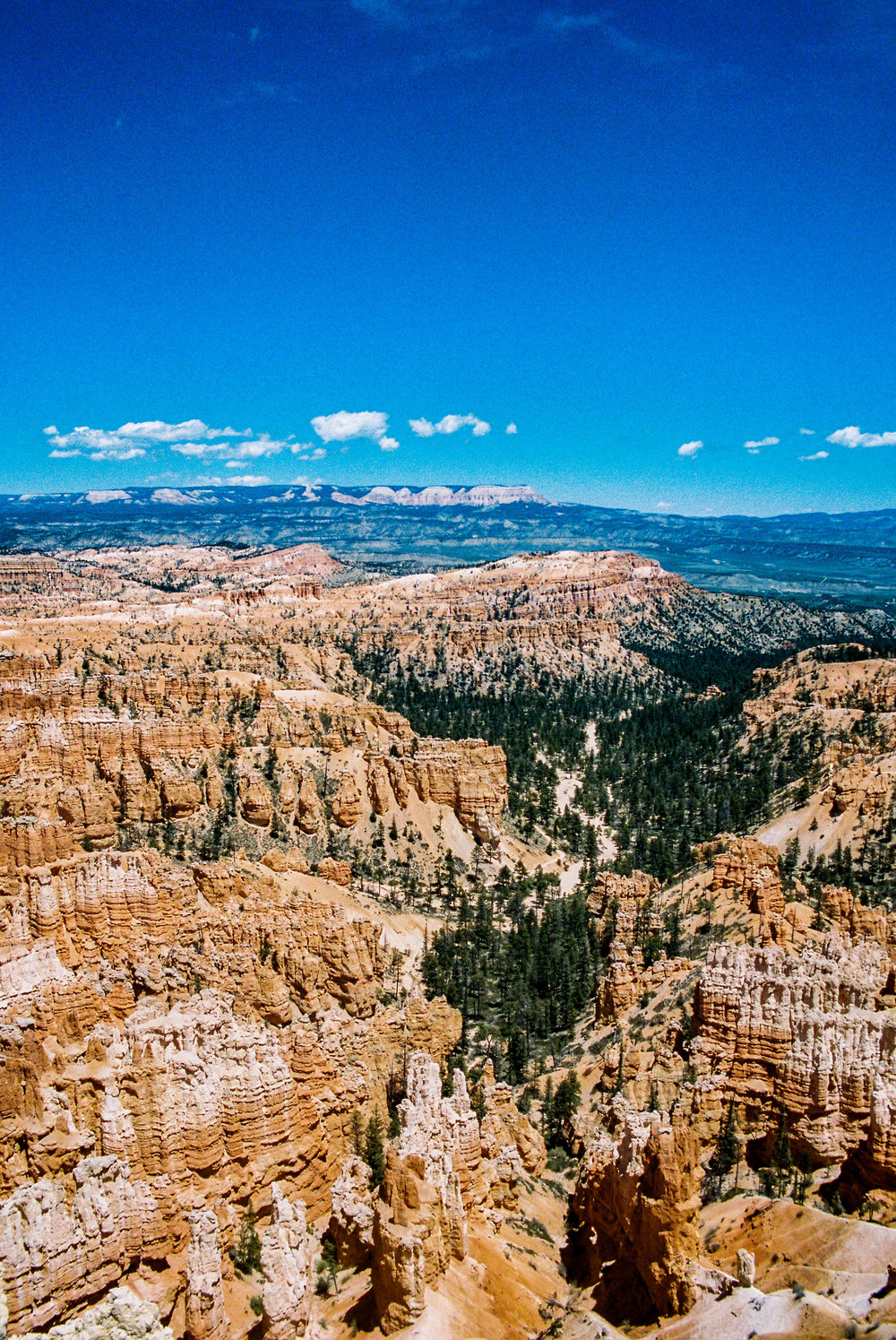 A 35mm film shot of Bryce Amphitheater from the Bryce Point Overlook