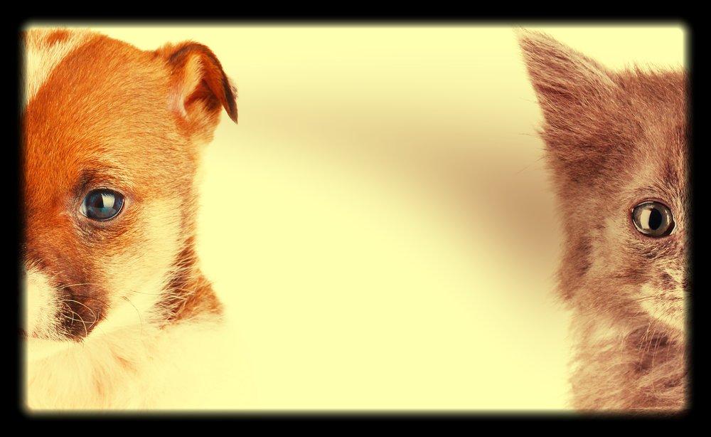 ペットの禁止 -