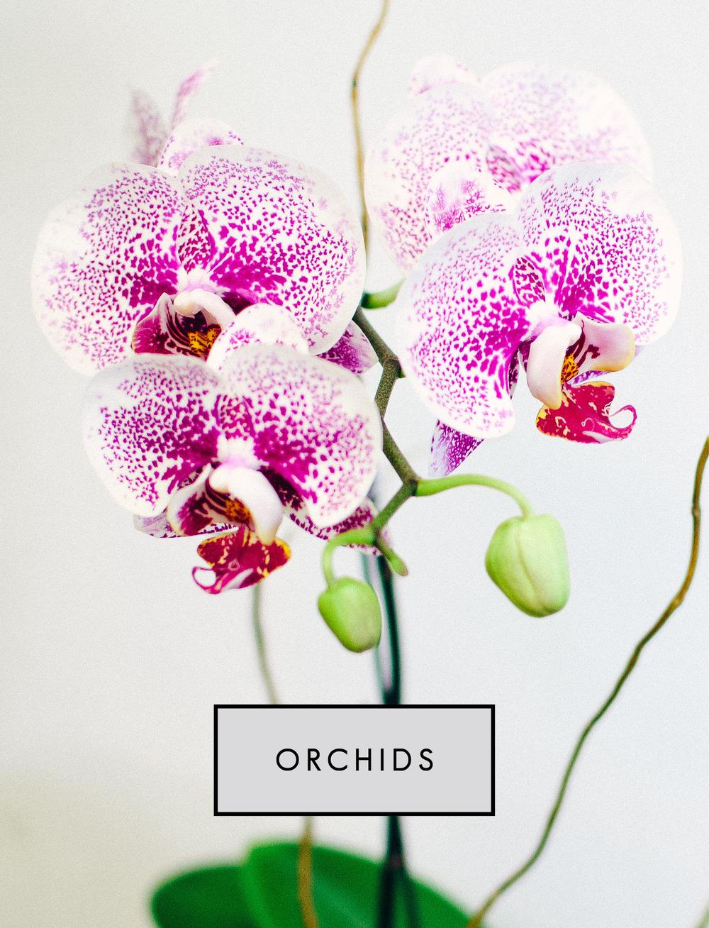 homepage v rec block orchids.jpg