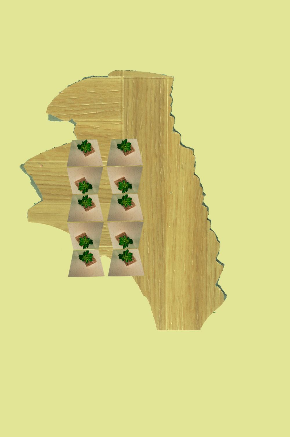 georgiaplantstack-1.jpg