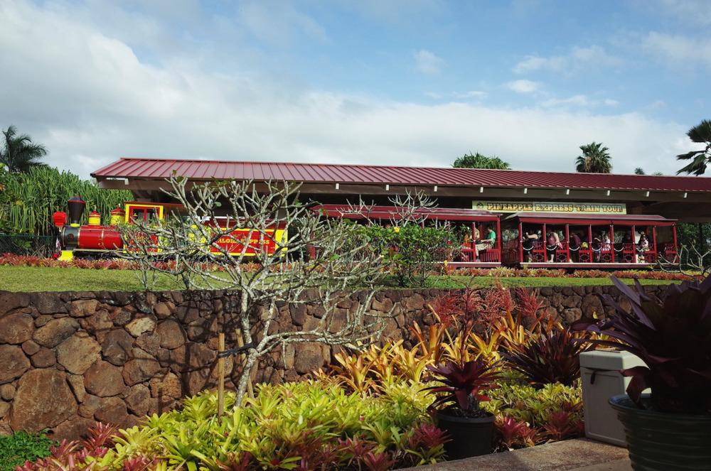 Divine Tio Dole Plantation Maze Pineapple Express