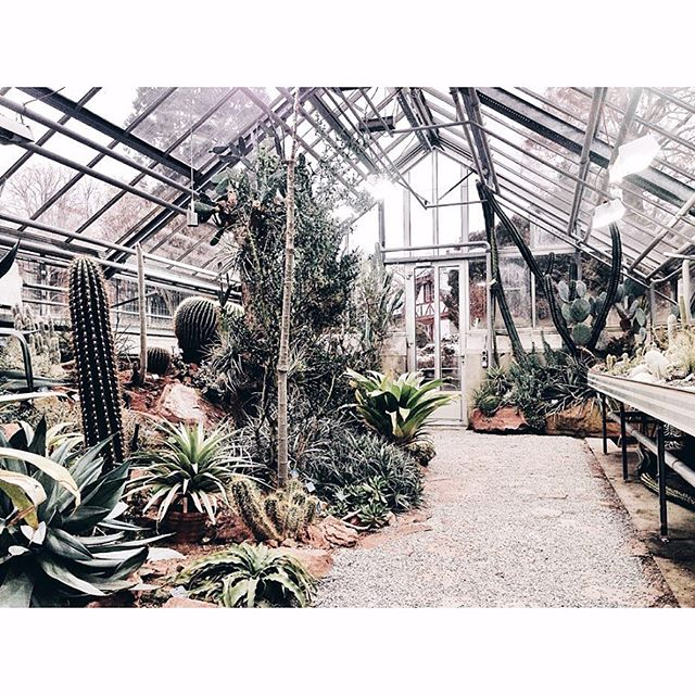Last sunday's exploration; from the cold and snowy mountains into the warm and beautiful botanical gardens in Basel 🌿