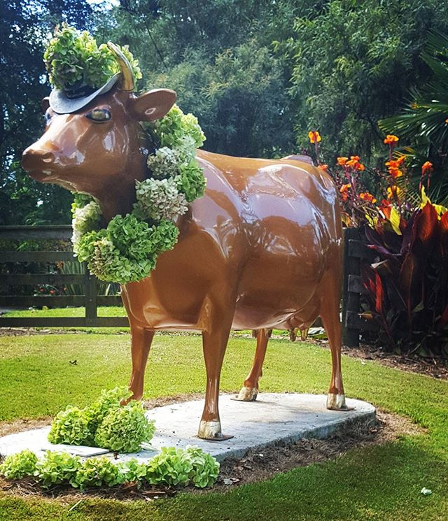 Goldie Horn is ready to welcome this week's Floral Art Festival garden visitors at Oak Lane Lodge, Morrinsville