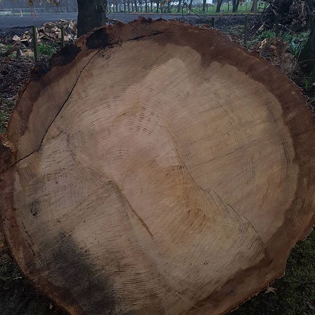 Can you count the number of rings??? This is a very old Oak tree that fell during a winter storm. Over a metre in diameter, leaving a bit of a hole in the driveway.